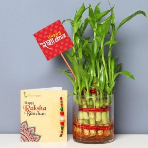 2 Layer Lucky bamboo with Designer Rakhi